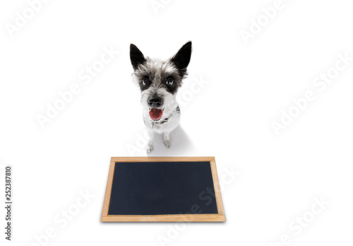 Foto op Canvas Crazy dog dog treat with owner