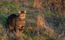 Neugierige Katze: Von Natur Au...