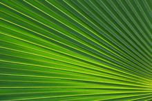 Palm Leaf Pattern For The Background.
