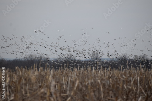 Winter Corn Field Canvas-taulu