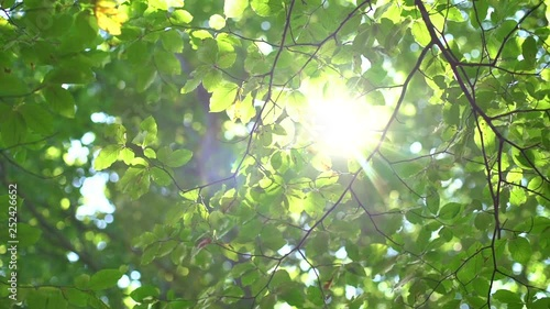 Obraz na plátně  Sunlight And Fresh Green Tree Leaves. Sunbeams in the forest.