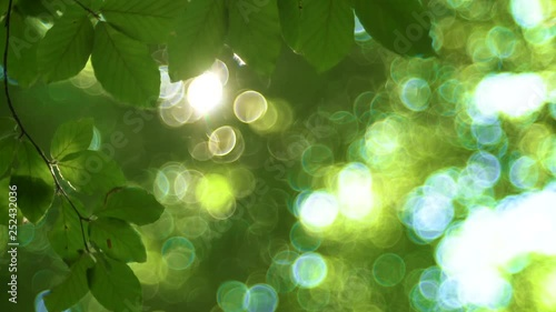 Fotografie, Obraz  Sunlight And Fresh Green Tree Leaves. Sunbeams in the forest.