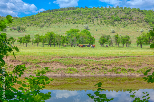 Foto  spring green nature with cows on the