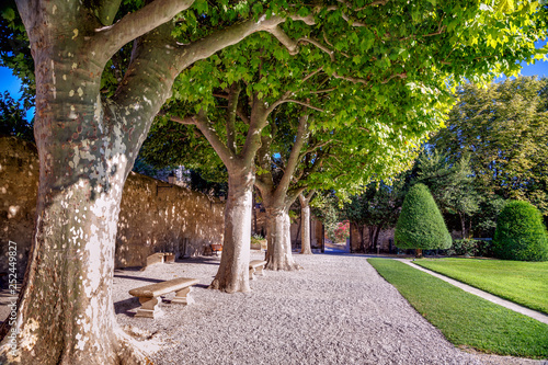 Photo Path in the park with old sycamore (platan) trees in a sunny summer day