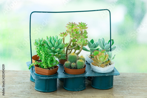 Fotografía  Mix types of Cactus and Echeveria Succulent Flowering Plants Indoor Houseplant P