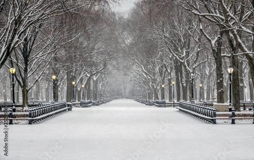 Central Park, New York City in winter Fototapeta