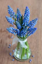 Grape Hyacinths Flowers