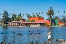American White Pelican, Black Coot, Ducks All Around Lincoln Park