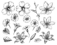 Hand Drawn Set Of Hibiscus, Lily, And Bindweed Flowers