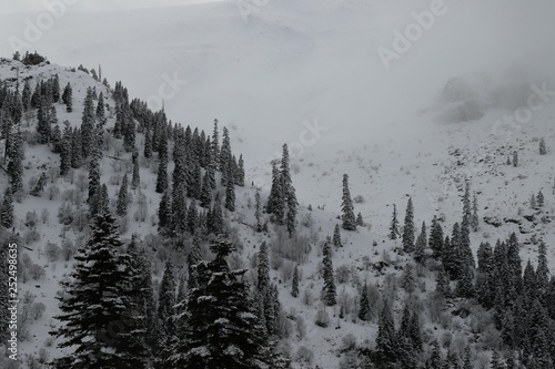 Poster Morning with fog winter view karadeniz artvin /savsat/turkey