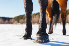 Four Hooves Of A Horse In A Winter Sunny Field