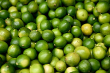 Freshly Harvested Green Tahitian Limes, Colombia, South America