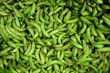Freshly Harvested Raw Green Colombian Plantains In A Farmers Market, Medellin, Colombia