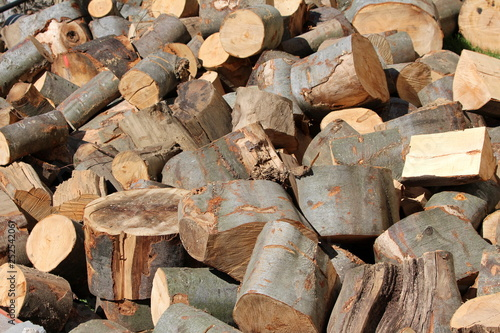 Fotografía  Pile of freshly cut firewood waiting for moving to storage area in preparation f