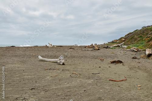 Foto op Plexiglas Afrika driftwood on the beach