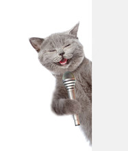 Cat Holds Microphone Behind White Banner. Isolated On White Background