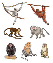 Set Of Different Monkeys - Vec...