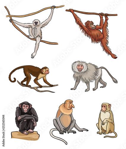Valokuva  Set of different monkeys - vector illustration