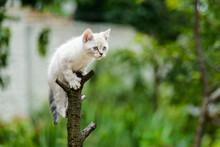 Funny Furry Grey Kitten Cat On...