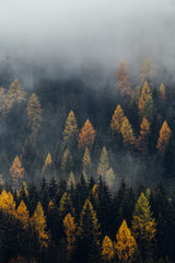 FototapetaFoggy Forest