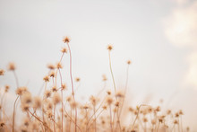 Grass Flowers On Sky Background With Sunlight