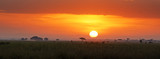 Fototapeta Sawanna - Sunrise in Amboseli National Park