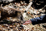 Fototapeta Zwierzęta - zwierzę ssak z człowiekiem