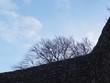 canvas print picture - Baeume ausserhalb einer Ruine