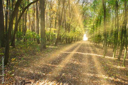 Sonnenstrahlen scheinen auf einen Waldweg im Frühling