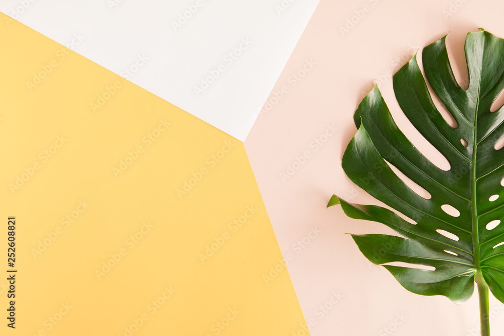 Fototapety, obrazy: Tropical palm Monstera leaves on summer yellow and pink background. Flat lay, top view