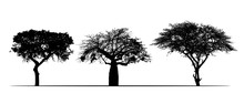 Set Of Realistic Silhouettes Of African Safari Trees, Acacia And Baobab. Isolated On White Background, Vector