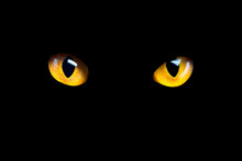 Orange Cat Eyes Glow In The Dark On A Black Background.