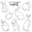 Vector collection of hand drawn realistic sketch rabbits.
