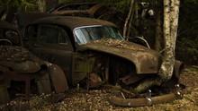 A Veteran Car With A Birch Tre...