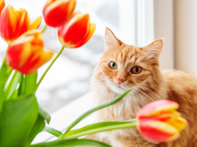 Cute Ginger Cat With Bouquet O...