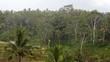 Rain in Bali Rice fields slow motion