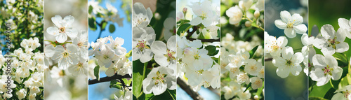 Fotografie, Tablou  flower collage of various types tree blossom