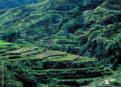 Photo  Unesco World Heritage: The Rice terraces of Banaue on the Island Luzon in the Region of Ifugao