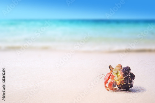 tropical sandy beach with hermit crab on white sand summer concept background Canvas Print