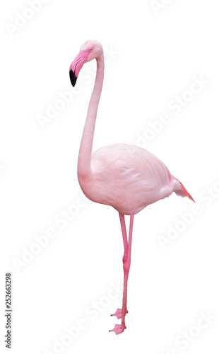 Flamingo bird isolate with clipping path on white background