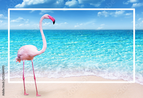 pink flamingo on sandy beach and soft blue ocean wave summer concept background
