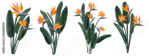 Fotomural  Strelitzia Reginae tropical flower bouquets set