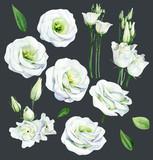 Set white eustoma luisianthus