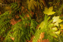 Background Of Wet Ferns And Co...