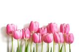 Fototapeta Tulipany - Bukiet różowych tulipanów