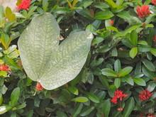 Green Butterfly Shape Leaf Of ...