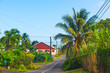 Narrow street surrounded by tropical vegetation in Guadeloupe island