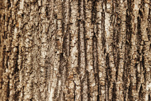 Close-up Macro Texture Of A Tree Trunk