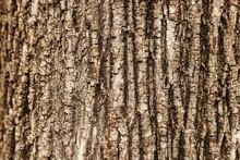 Close-up Macro Texture Of A Tr...