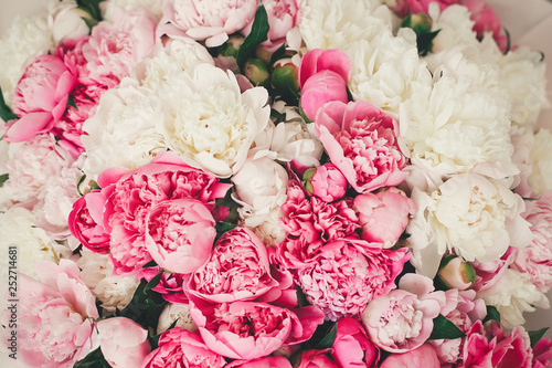 Poster Fleur Peonies pattern wallpaper. Beautiful pink and white peony flowers close up. Hello spring. Happy mothers day. International womens day